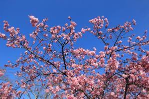 春色でルンルン気分♪ - happy-cafe*vol.2