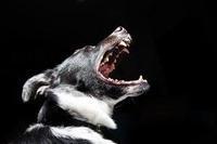 パンをやらんとして犬にかまれるの巻~美術と予測 - 原初のキス