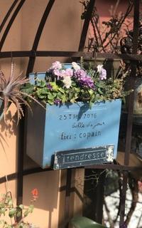 フリル咲き パンジー ローブ ドゥ アントワネットその後 - 小さな庭 2