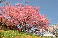 春の花 - 思い立ったが吉日