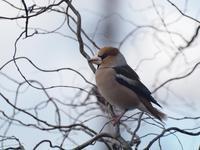 『木曽川水園の鳥と花と水辺風景・・・・・』 - 自然風の自然風だより