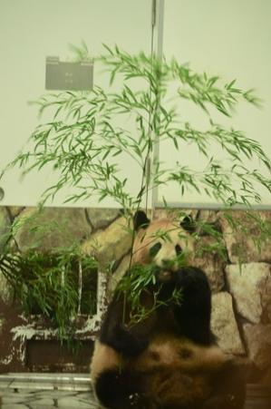 パンダフルデイ - ご機嫌元氣 猫の森公式ブログ