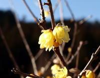 春になったのかな(^.^) - 自然の中でⅡ