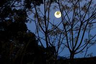 今朝の月 - 長い木の橋