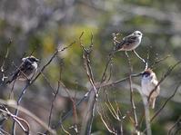 遊歩道の小鳥たち - 花と葉っぱ