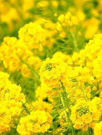早春の三崎と。。マグロめぐり ^(●●)^ - やよいの空