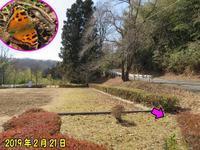 ヒオドシチョウ初見 - 秩父の蝶