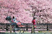 春の宴(二) - 123!