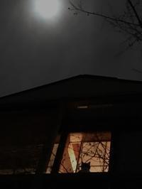深夜の猫迎え - 楽家記(らくがき)