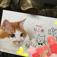 2月22日猫の日 - ズームでバッチリ