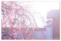 夢見ることをやめてはいけないよ。 - Yuruyuru Photograph