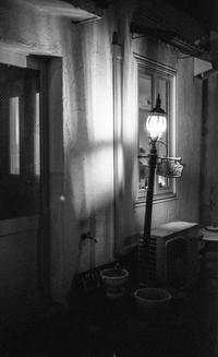 白壁にはりつく夜行性のヒカリトカゲ - Film&Gasoline