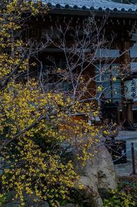 蝋梅の香りに包まれて~大蓮寺 - 鏡花水月