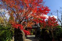 京の紅葉2018彩られる正法寺 - 花景色-K.W.C. PhotoBlog