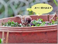 スズメのおしゃべり - 趣味を楽しみながら