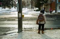 雪が融けた横断歩道とイボタの生け垣 - 照片画廊