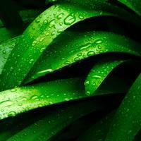 ・drop of rain water・雨のしずく - - Foliage & Blooms Foto -