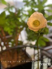 〜ようこそ〜♬ -  Flower and cafe 花空間 ivory (アイボリー)
