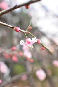 春へ、また一歩 - Awesome!