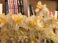 春の気配が・・・「庭の花花で季節を感じる今日この頃です」編 - 納屋Cafe 岡山