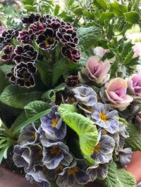 早春のコンテナガーデニング - piecing・針仕事と庭仕事の日々
