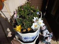 クロッカス - ひめたんママちゃんのブログ