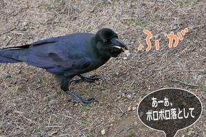 明石公園 2019.02.21 ブトちゃん - At Studio TA