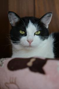 おニューなベッド#21 - Black Cat Moan