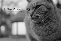 吾輩は猫である - すずちゃんのカメラ!かめら!camera!