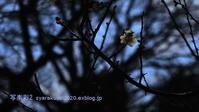 植物園に行く2月-6 - 写楽彩2