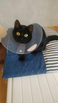 今日はネコの日 - きたのさと動物病院 | 札幌白石区・東区 | 一般診療・皮膚科・耳科