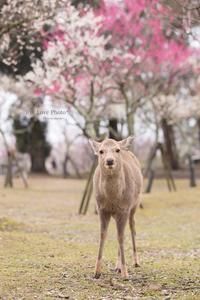 鹿活~早春Ver.~ - Eye Love Photo*