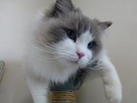 2.22で猫の日 - Chelsea Cafe