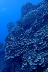 19.2.22浮原周辺で! - 沖縄本島 島んちゅガイドの『ダイビング日誌』