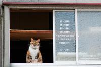 猫の日 - 日々の欠片を紡ぐ日々