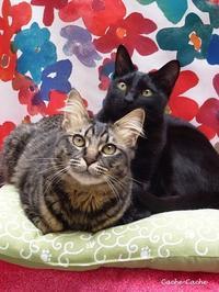 今日は猫の日♪ - キッチンで猫と・・・