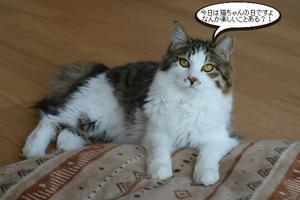 猫さんの日ですが - 保護猫さんのご縁探し