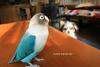 B.B & Chipo*少し前のめりなキミへ - FUNKY'S BLUE SKY