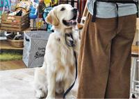 犬のしつけ方教室2/21 - SUPER DOGS blog