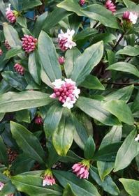 春の香り - 山の花、町の花