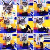 猫の日 - 365歩のマーチ