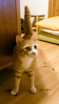 トラちゃん再発見 - 猫と夕焼け