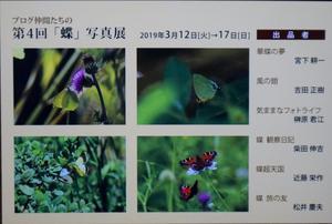 「蝶」写真展のお知らせ -