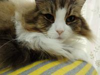 『今日は猫の日なので我が家の姫を・・・・・』 - 自然風の自然風だより