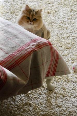 猫の日は親バカに - ちりめん戯縫