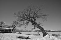 冬の道東巡り.....12 - slow life-annex