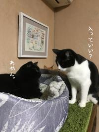しーちゃんVSはちわれくりちゃんあかん・・ - gin~tetsu~nosuke