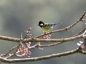 台湾野鳥撮影その23 - 季節の映ろひ