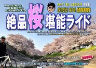 3/31(日)絶品桜堪能ライド - ショップイベントの案内 シルベストサイクル