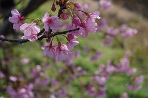 19.02.10:福ふくの里に菜の花を訪ねて5 -